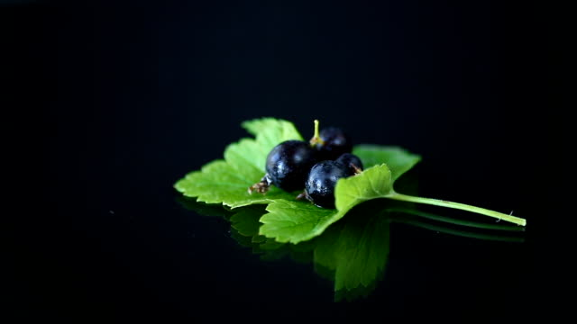 ripe black currant with foliage on black background video