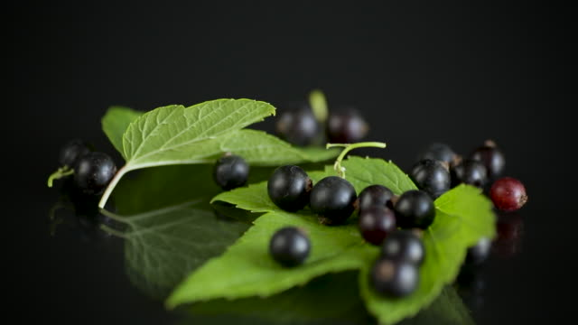 ripe black currants with leaves on black background video