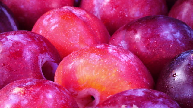 Ripe juicy organic plums rotate Sweet fresh fruits closeup background from the garden plum stock videos & royalty-free footage