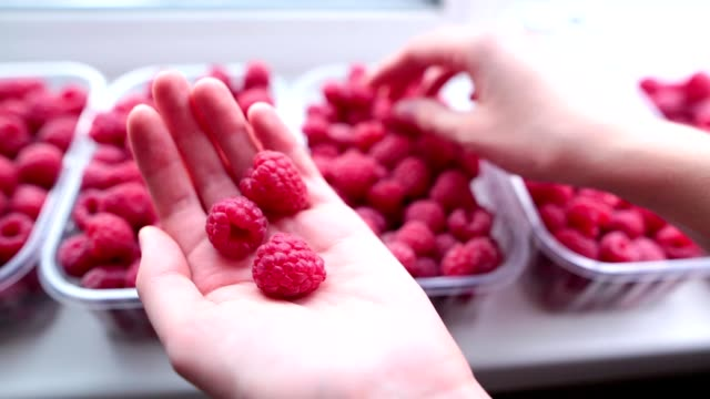 Ripe juicy organic raspberry in the hands of a girl. Closeup shot Ripe juicy organic raspberry in the hands of a girl close-up on a background of berries. handful stock videos & royalty-free footage