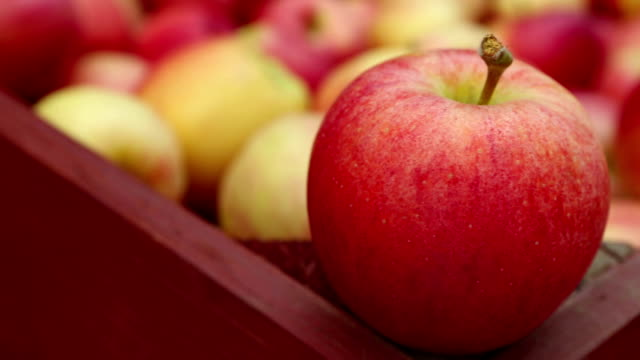 Ripe Organic Gala Apples video