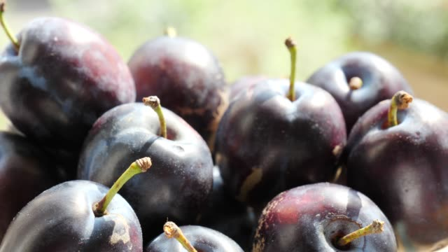 Ripe plums fruit close up Close up of fresh ripe garden plums fruit. Healthy eating, season autumn harvest plum stock videos & royalty-free footage