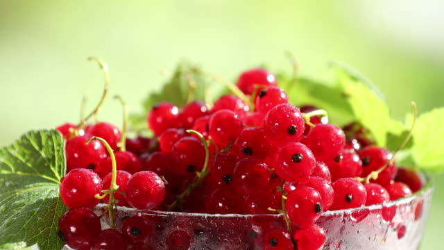 ripe red currant with water drops and green leaves in glass dish - ribes rosso video stock e b–roll