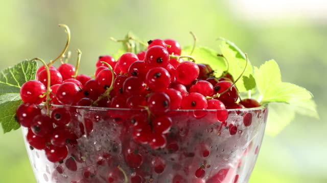 ripe red currant with water drops move in frame. - ribes rosso video stock e b–roll