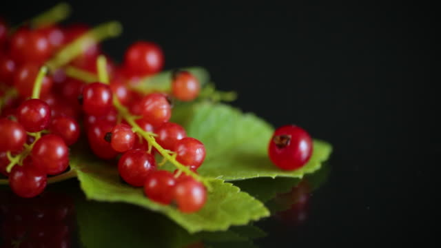 ripe summer berry red currant on a black video