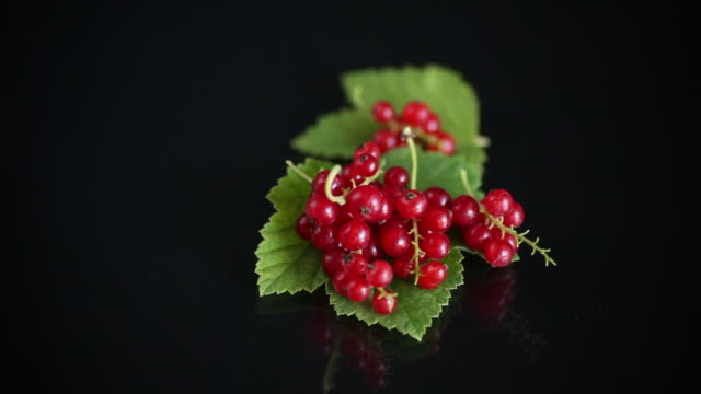 ripe summer berry red currant on a black - ribes rosso video stock e b–roll