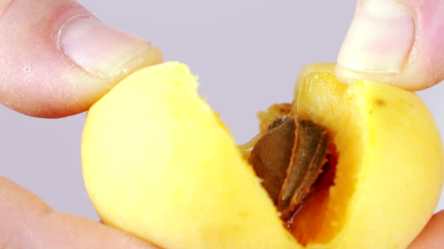 vídeos de stock e filmes b-roll de ripping fresh apricot in half with hands slow motion extreme close-up - damasco fruta