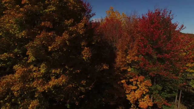 Rising Above The New England Foliage video