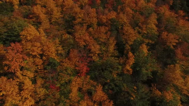 Rising Hill Covered in Fall Trees video