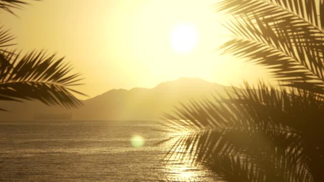 Aufgehende Sonne durch die Palmen auf das Meer und Wüste Berge – Video
