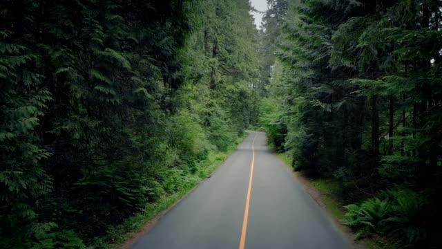 durch bäume über forststraße aufsteigen - vancouver kanada stock-videos und b-roll-filmmaterial