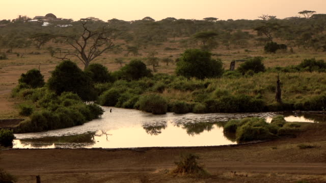 AERIAL: River bank plants reflecting in waterhole at sunset in safari game park video