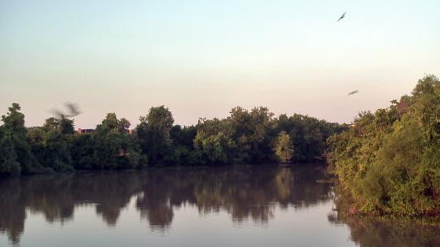 vídeos y material grabado en eventos de stock de río pájaros - parte del cuerpo animal