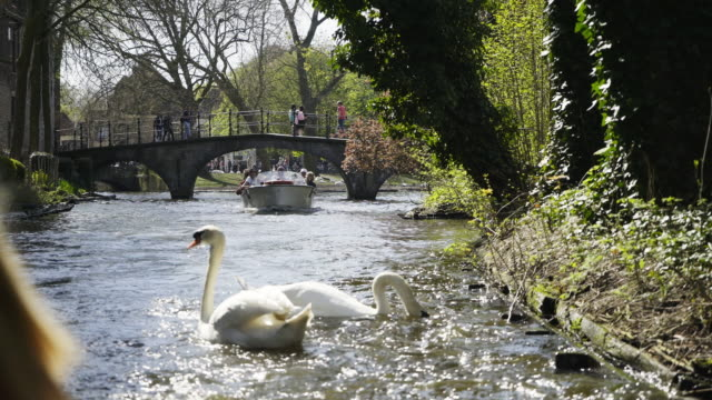river canal through city park - bruges video stock e b–roll