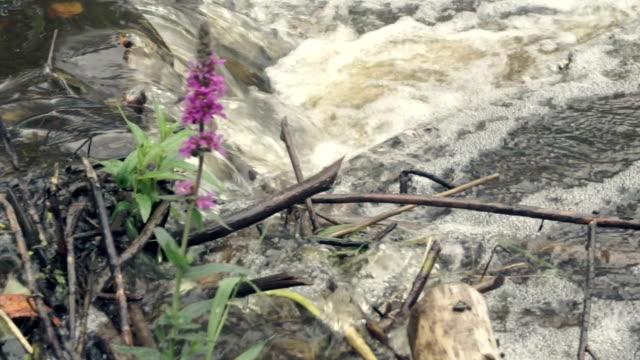River dam of twigs video