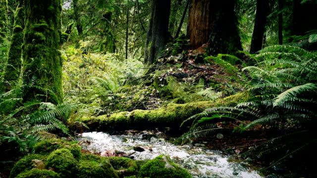 river deep in the woods - muschio flora video stock e b–roll