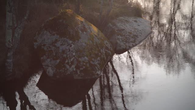 river flow - wood texture filmów i materiałów b-roll