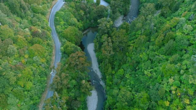vídeos de stock e filmes b-roll de river flowing in forest. - wellington