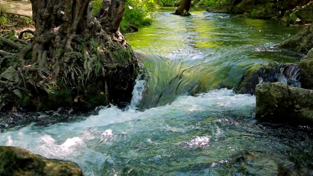 River Flowing in the Forest video