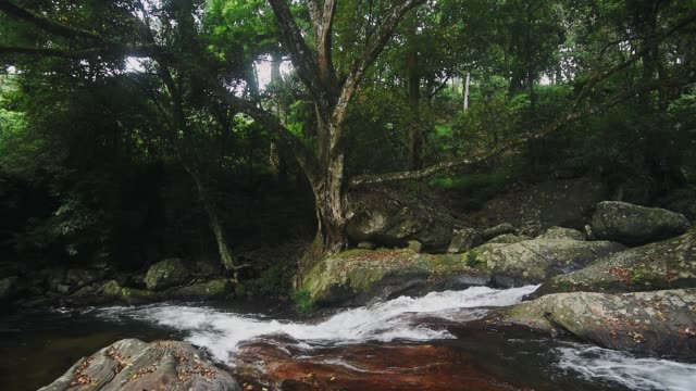 River flowing on a rocky ground in the middle of a forest, in Munnar, India