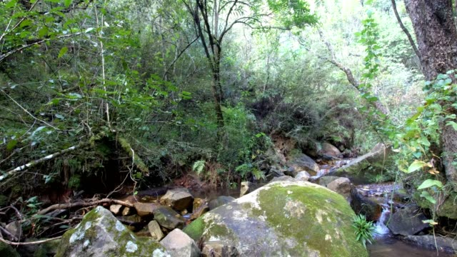 River flowing through a green forest A beautiful river flows through a forest in the foothills of the mountains natal stock videos & royalty-free footage