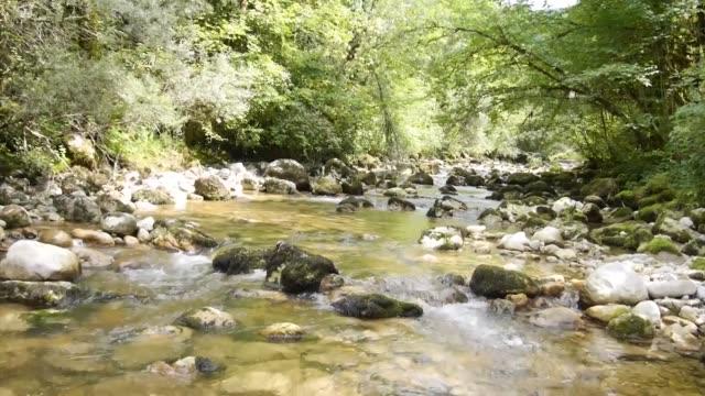 ormandaki nehir - ravenna stok videoları ve detay görüntü çekimi