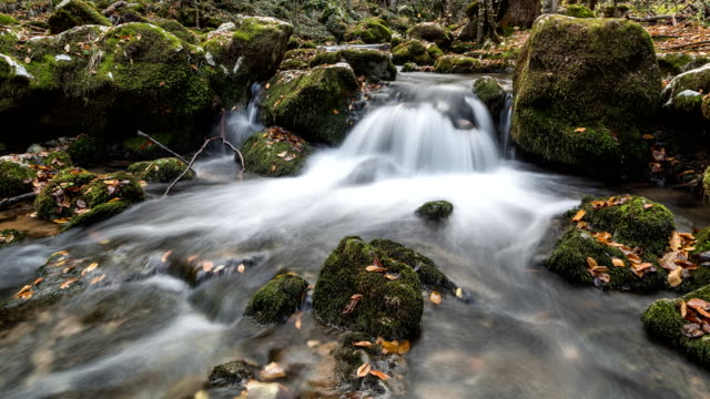 River in the forest at autumn video
