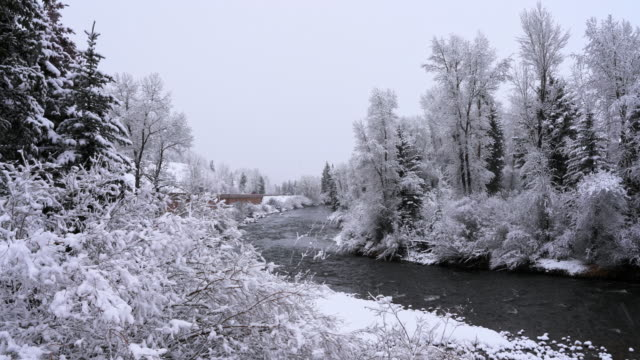 River in the forest in the Colorado Mountains under snowfall. Panoramic camera motion.
