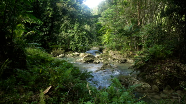 River in the rainforest video