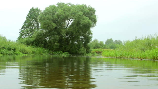 River landscape Low flow forest river duckweed stock videos & royalty-free footage