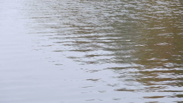 River or lake with waves. Yellow leaf in the river. Close up video