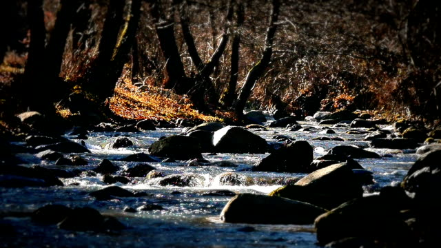 river rock tree autumn video