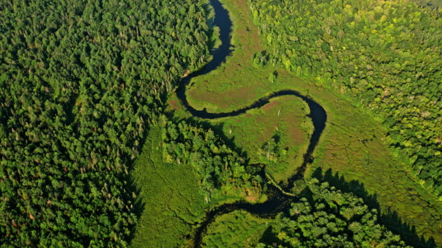 AERIAL River running through the sunny forest in Ontario, Canada Aerial shot of a river running through a forest in a marsh landscape in Ontario, Canada. marsh stock videos & royalty-free footage