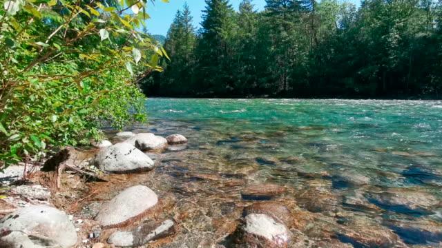 flussstrom fließt durch rainforest forest im pazifischen nordwesten - vancouver kanada stock-videos und b-roll-filmmaterial