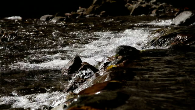 River stream in the tropical forest. video
