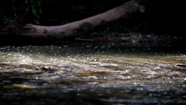 vidéos et rushes de rivière - eau vive