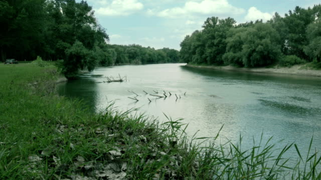 River with willows growing on banks. Landscape video