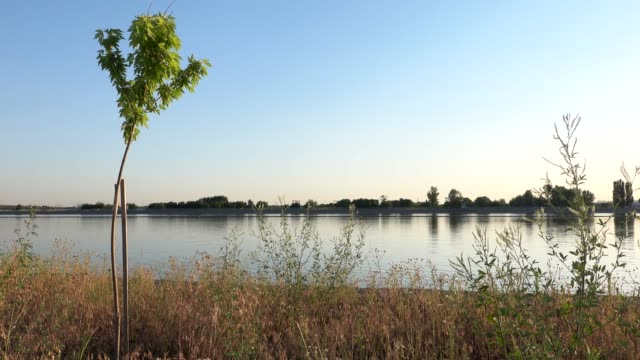 Riverbank at sunset. Lakeshore out of city, rural scene in summer countryside Riverbank at sunset. Lakeshore out of city, rural scene in summer countryside. High quality 4k footage riverbank stock videos & royalty-free footage