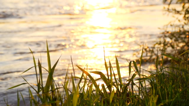 HD SUPER SLOW-MO: Riverbank At Sunset video
