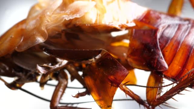 ゴキブリ - 四肢点の映像素材/bロール