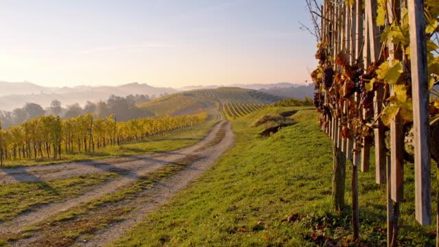 ds väg längs hösten vingårdar - steiermark bildbanksvideor och videomaterial från bakom kulisserna