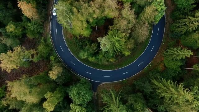 strada curva nella foresta  - strada tortuosa video stock e b–roll