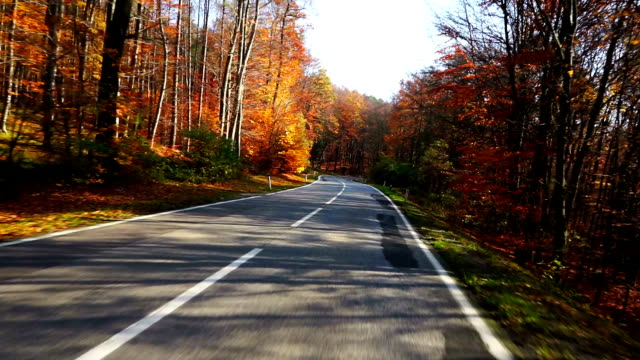 Road driving in autumn forest video