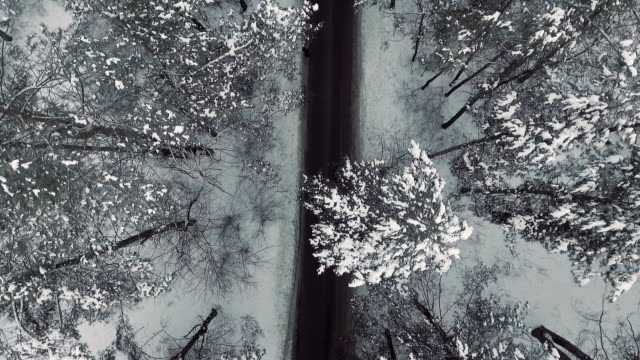 Road in a winter forest from above video