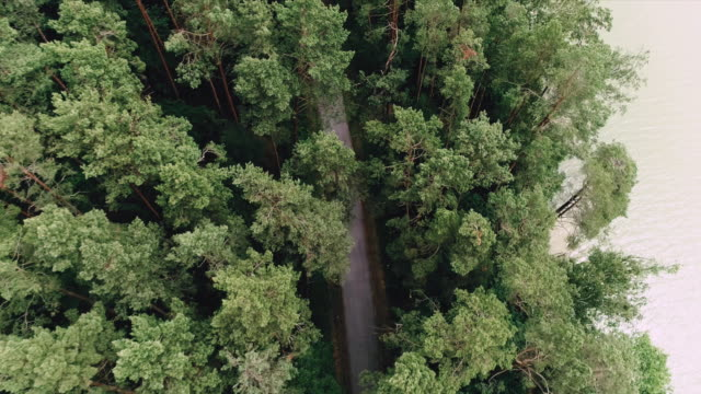 Road in forest. Aerial view