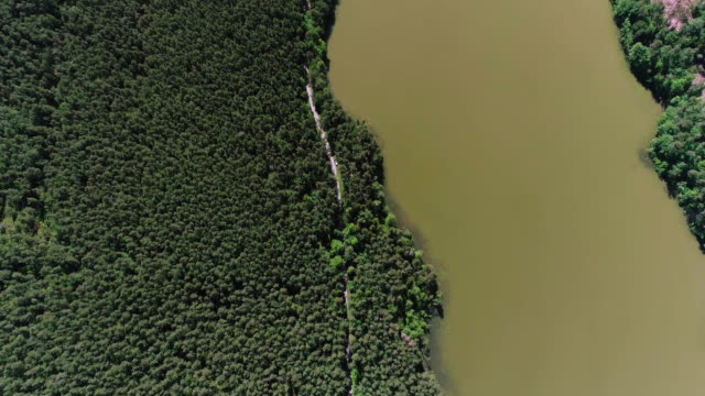 Road in forest. Lakeshore Aerial view