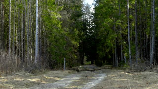 vídeos y material grabado en eventos de stock de camino en bosque soleado - pino conífera