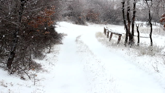 Road in the forest during winter video