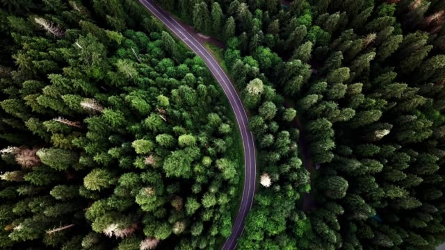 road in the middle of the forest in north america road in the middle of the forest in north america curve stock videos & royalty-free footage