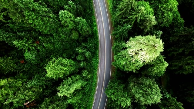 road in the middle of the forest in north america